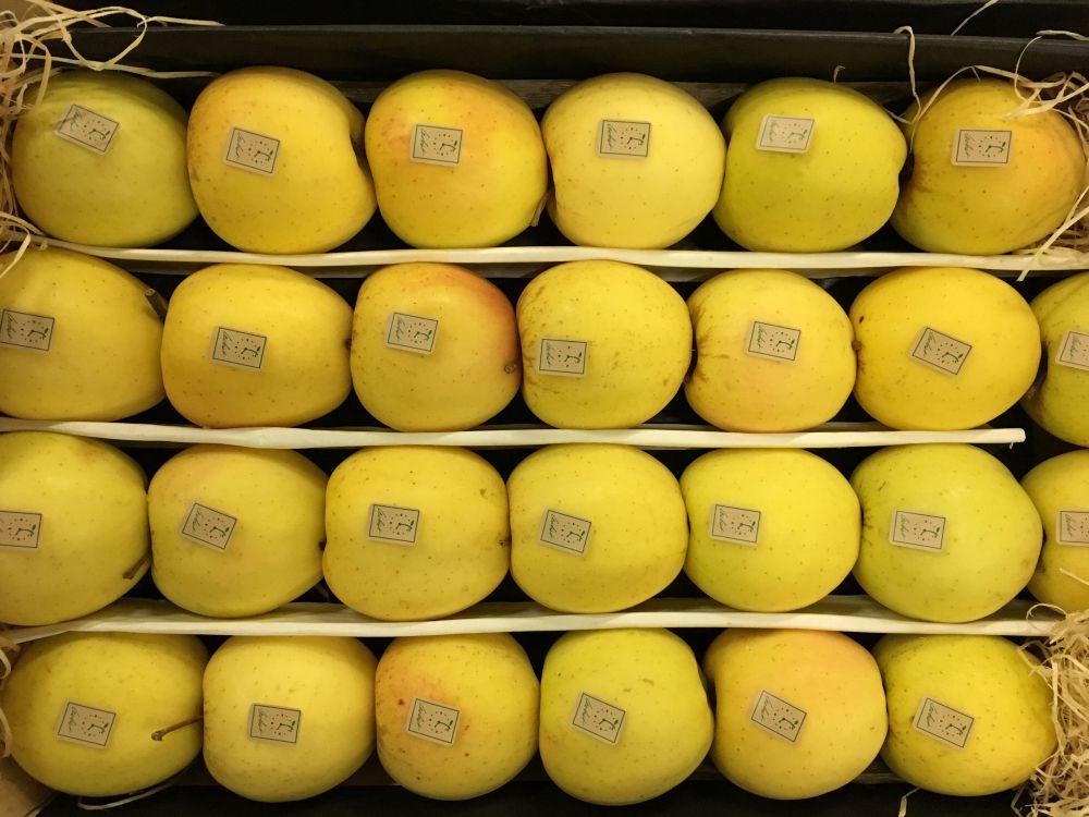 pomme golden-atlantic-primeurs