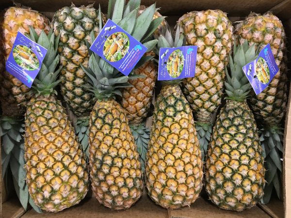 ananas-atlantic-primeurs