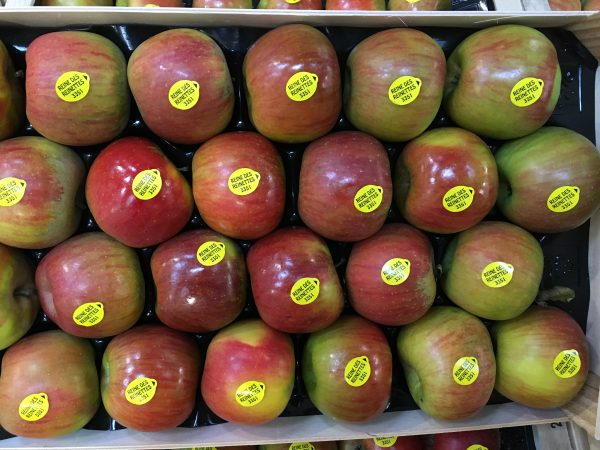 pomme reinette-atlantic-primeurs
