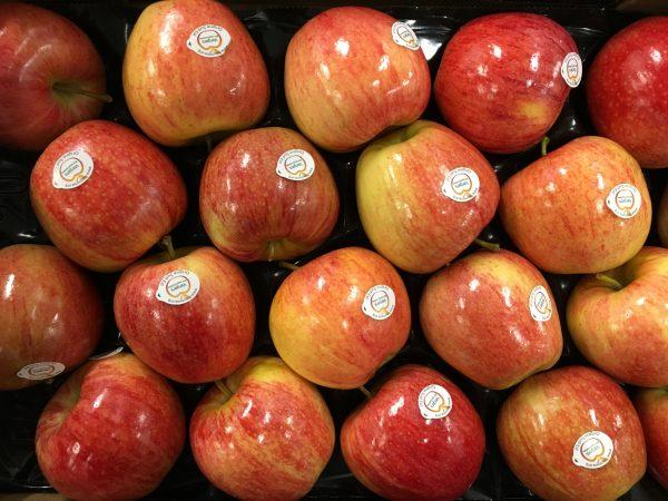 pomme royal gala-atlantic-primeurs