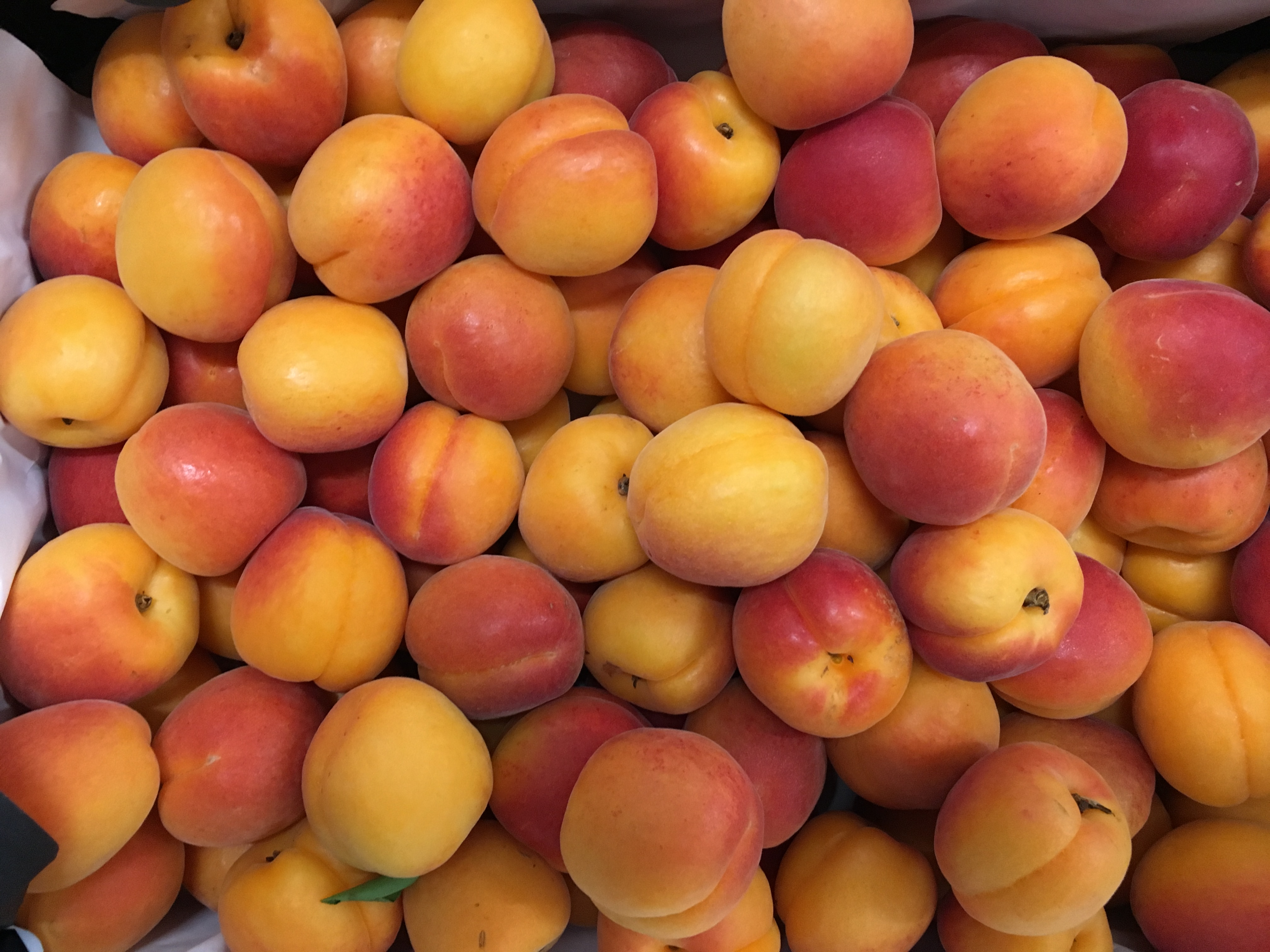 abricot-atlantic-primeurs