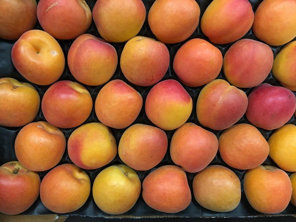 abricot français-atlantic-primeurs