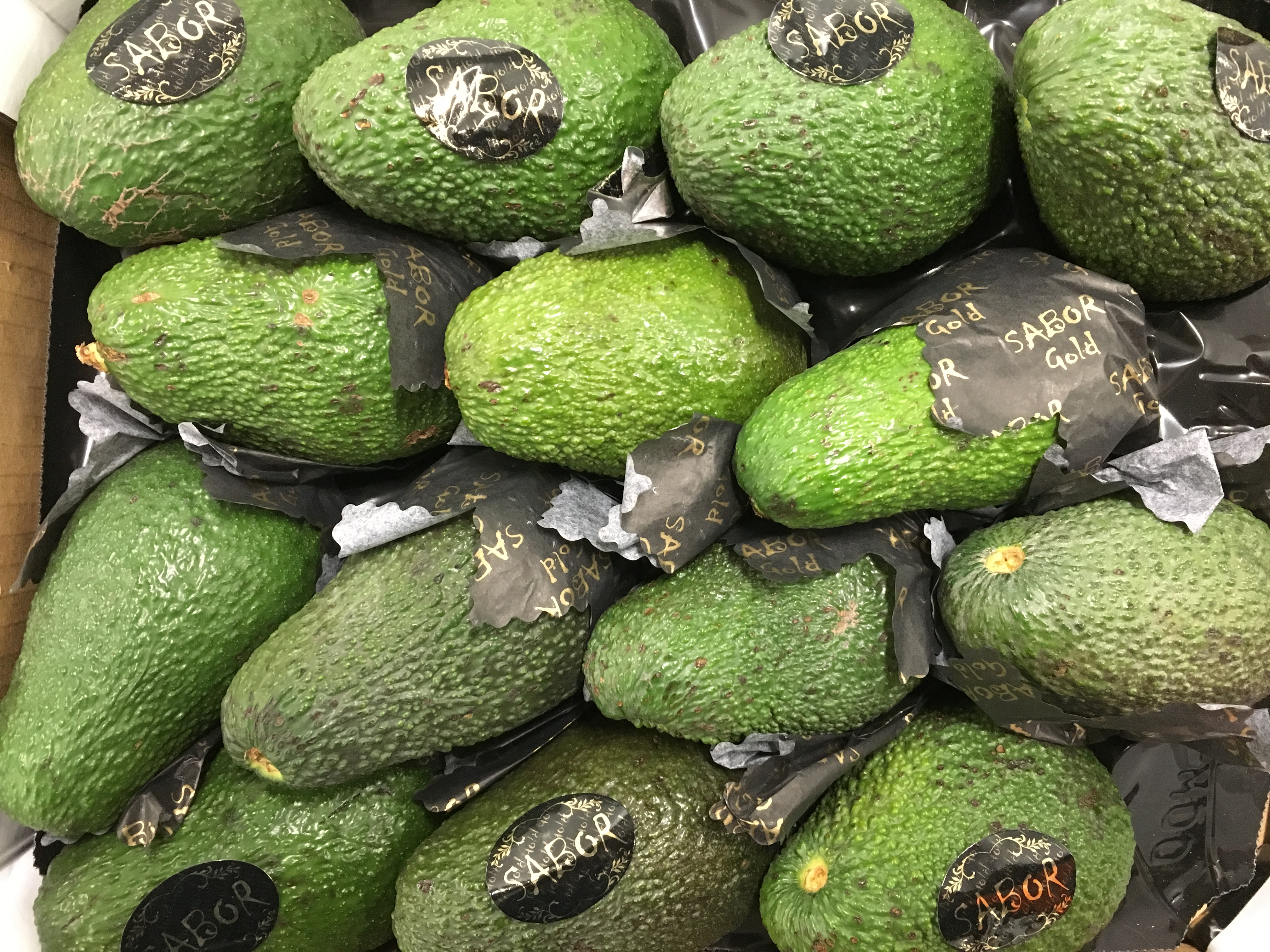 avocat sabor-atlantic-primeurs