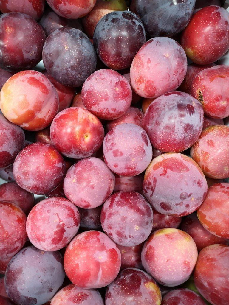 prune rouge olbinaya-atlantic-primeurs