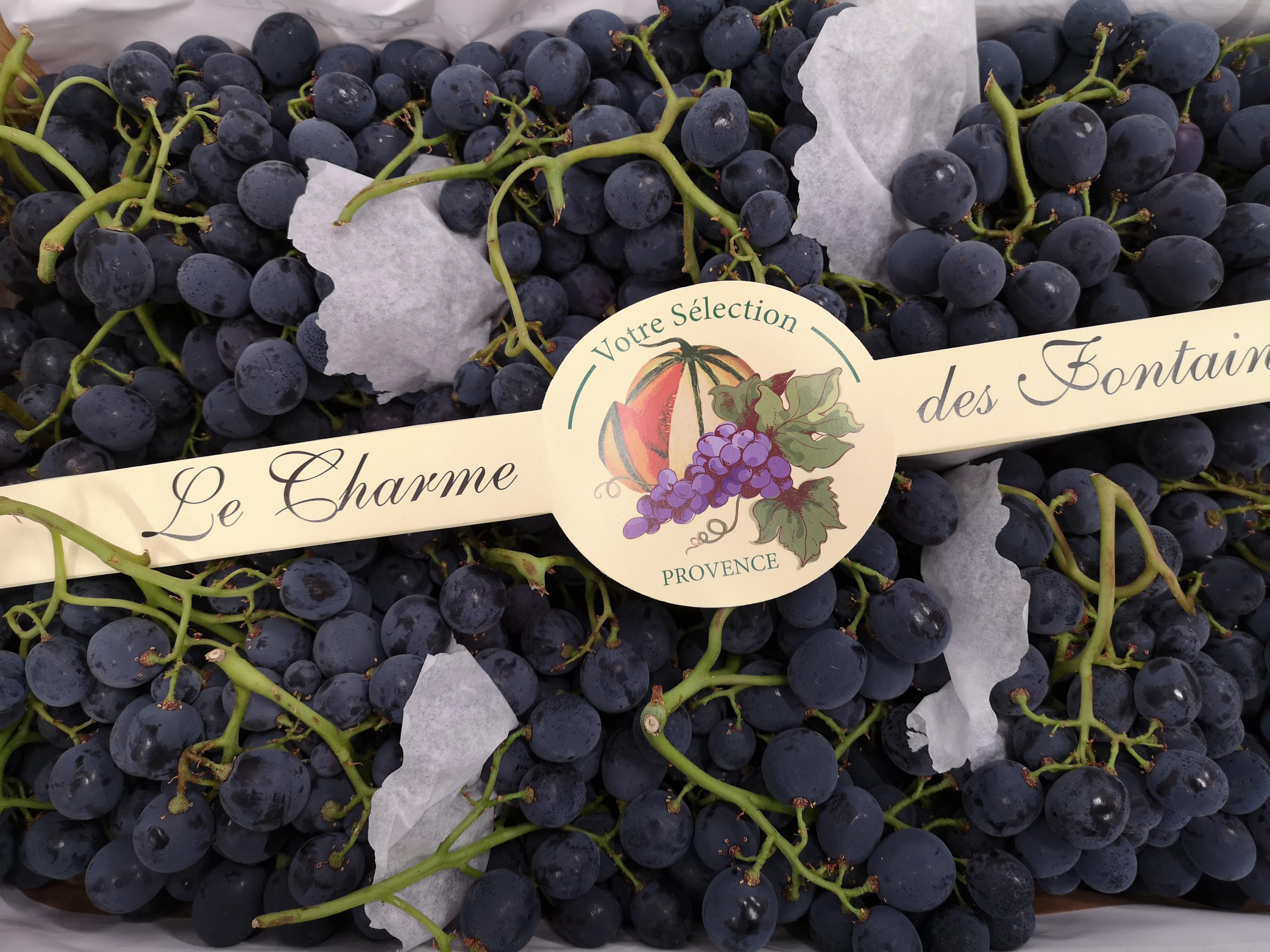 raisin noir prima-atlantic-primeurs