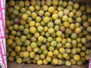 prune mirabelle de lorraine-atlantic-primeurs