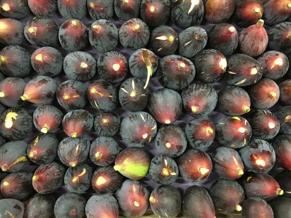 figue noire-atlantic-primeurs