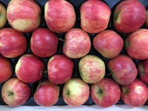 pomme Royal Gala bio-atlantic-primeurs